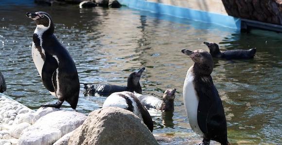Guldborgsund Zoo & Botanisk Have