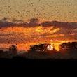 Fugletur ved Bremsbøl Sø - trækfugle ved grænsen og Sort Sol som bonus