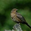 Fugletur ved Gundsømagle Sø - oktobers mylder af fugle