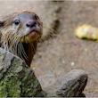 Vild efterårsferie i Guldborgsund Zoo & Botanisk Have