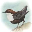 Fugletur til Lysebro Mose og Hejrede Sø