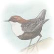 Åbent Hus ved Gedser Fuglestation - ringmærkning