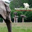 Elefantisk efterårsferie - Knuthenborg Safaripark